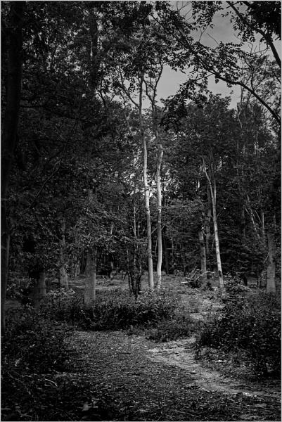 Woodland Footpath by AlfieK