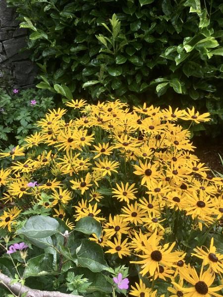 Flowers in Starbank Park, Edinburgh. by Pinarellopete