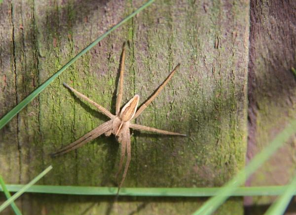Garden Spider by joshuageorge