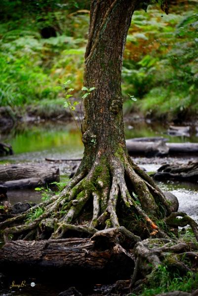 Tree Roots by jb_127