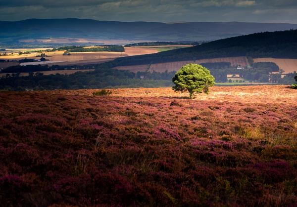 Lone Tree by Osool