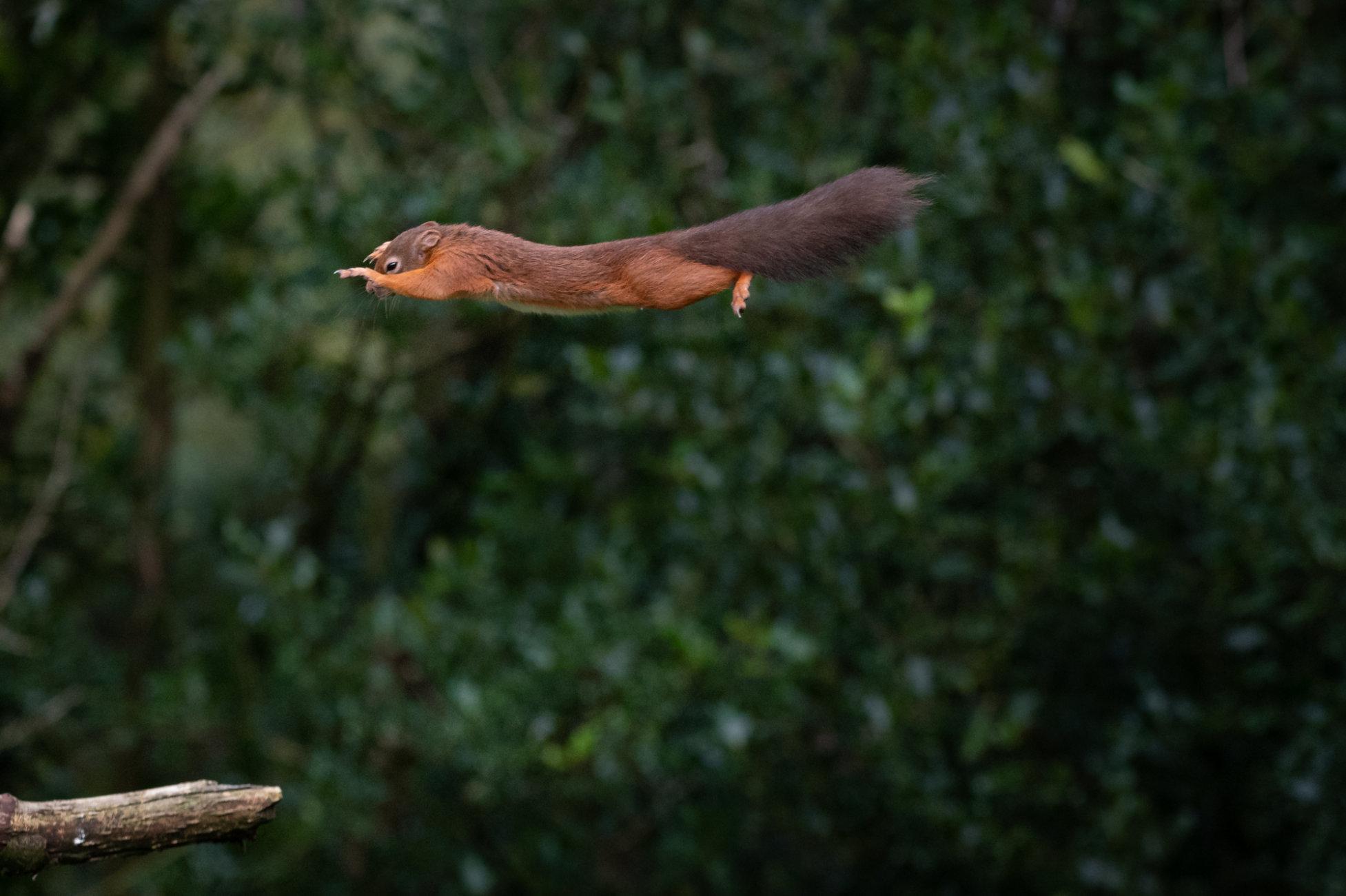 MCU Squirrel