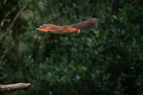MCU Squirrel by markst33