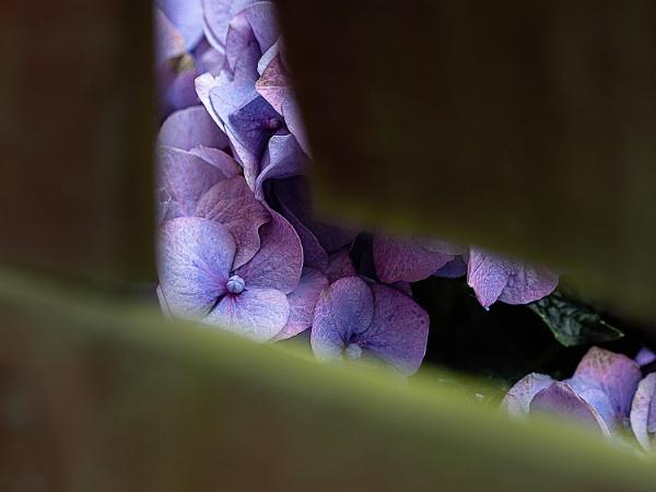Peek-A-Boo by kaybee