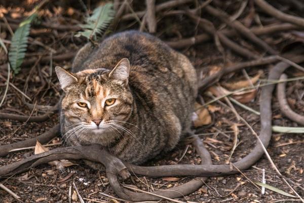 Kitty by Coen
