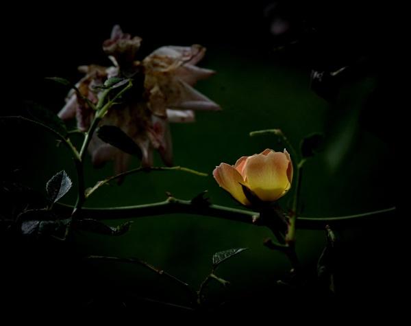 Sweet Dream,, by Mollycat