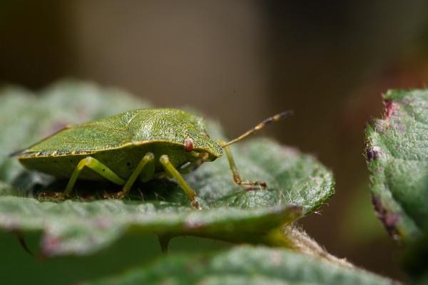 Beetle by davereet