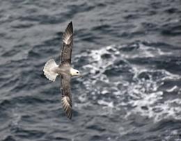 Gull below