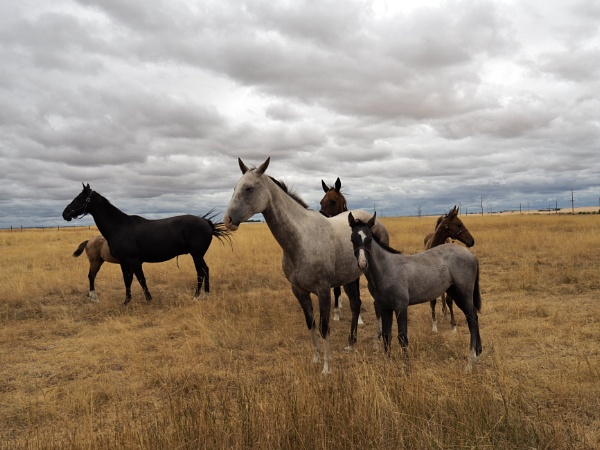 Mares and foals by waltknox