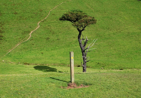 Tree and sign post shadow by frogs123