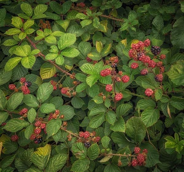 Autumnal feeling by BillRookery