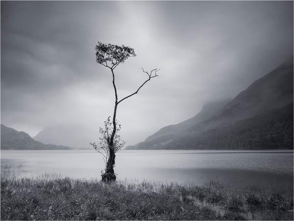 Buttermere Tree by Leedslass1