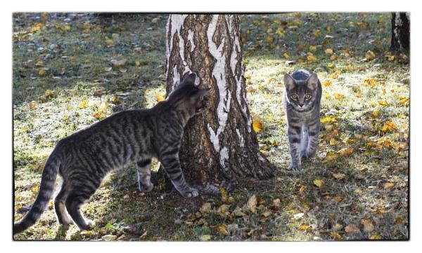 not quite the Serengeti......nobody told us! by bornstupix2