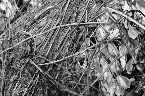 Pile of twigs by OverthehillPhil