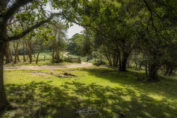 New Forest by IainHamer