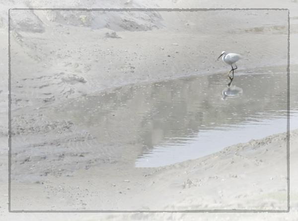 Egret by MAK2
