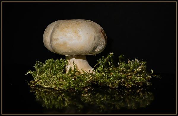 Mushroom by deejay10