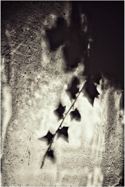 ~ Visceral Shadows 2 ~ by Lovebe_eyes