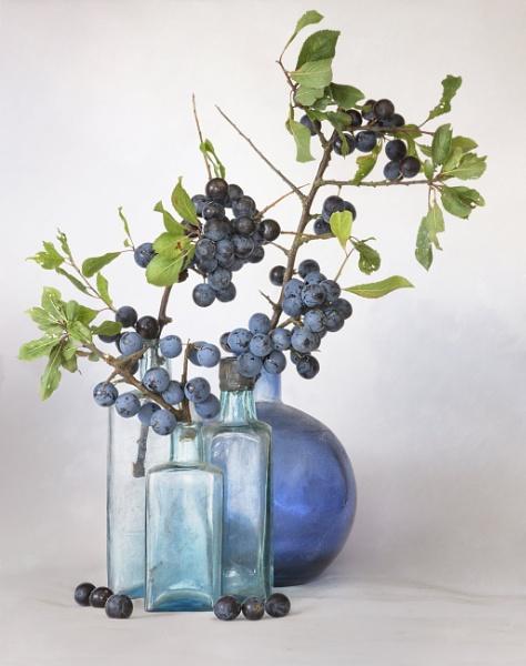 Sloe Berries by chase