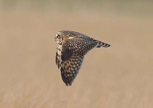 Shorties in flight by NeilSchofield