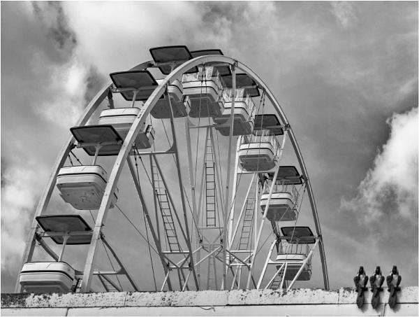 A ferris wheel and a trio of birds. by franken