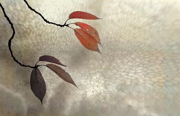Autumn Leaves - rework by helenlinda