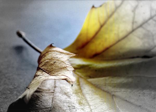 Leaf - rework by helenlinda