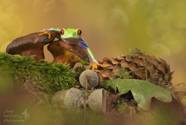 Froggy autumn by Angi_Wallace