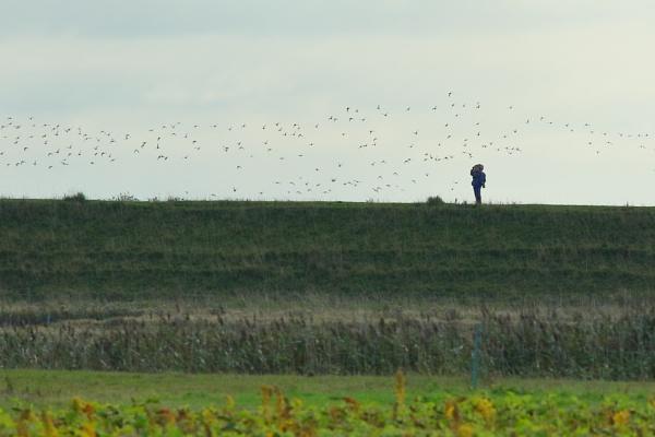 The Birdwatcher... by TerryMcK
