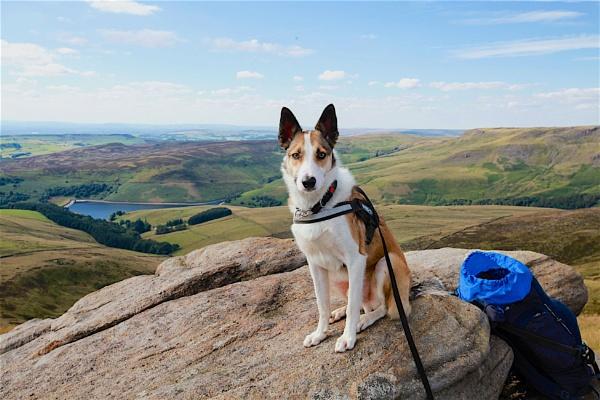 Hiking Dog by Craig99999