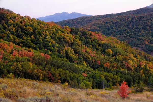 Tales of autumn by mlseawell