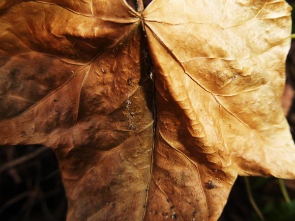 Nature and Autumn... by Chinga
