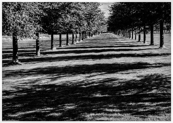 Avenue of Shadows by mac