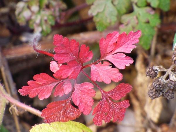 Autumn colours by Mazza46