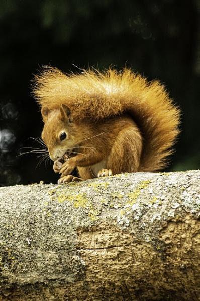 Feeding Squirrel by ChristopherA