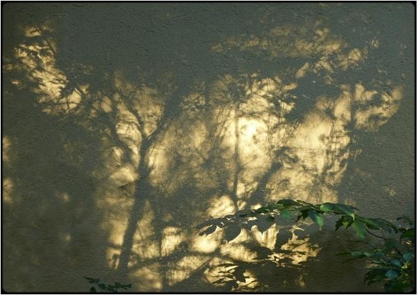 shadowplants by FabioKeiner