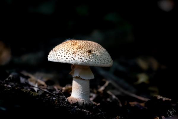 Fungi by tomriley