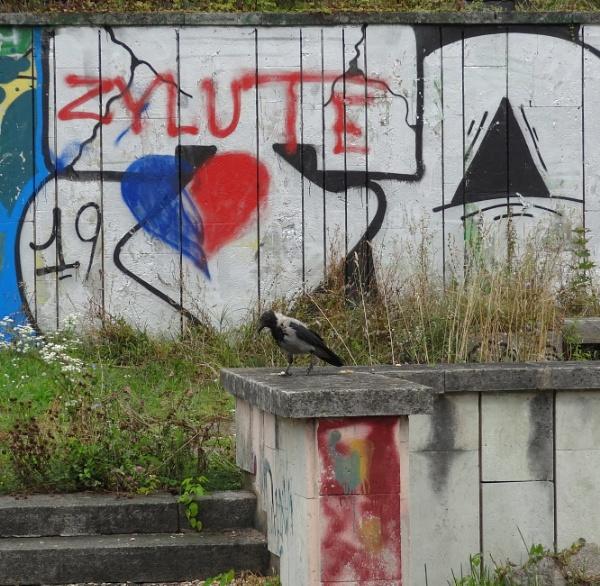 "Little tit (\""Zylute\"" [Lithuanian] means small tit) by SauliusR"