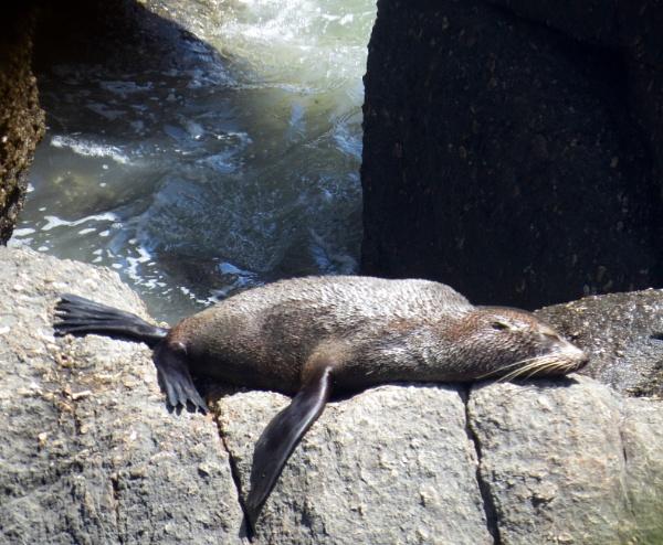 Seal snooze by BlueJonnyp