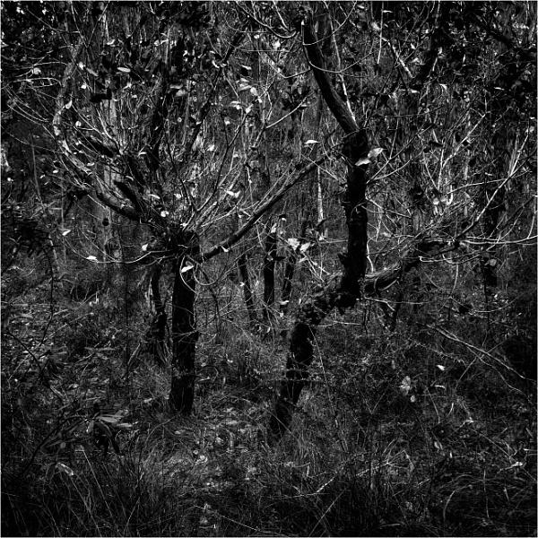 Twigs by tvhoward950