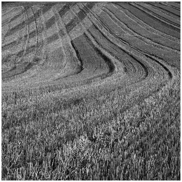 Tracks In the field by bliba