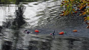 Tees swimming