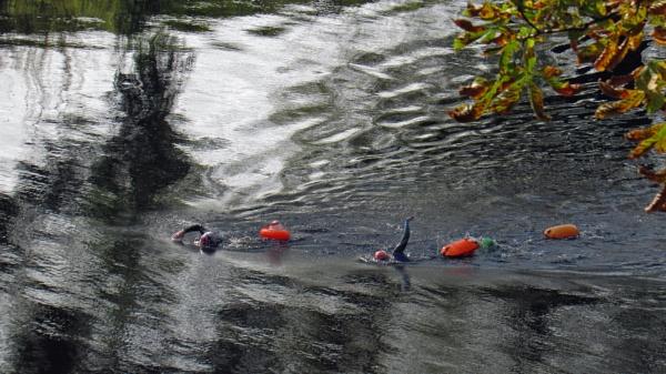 Tees swimming by oldgreyheron