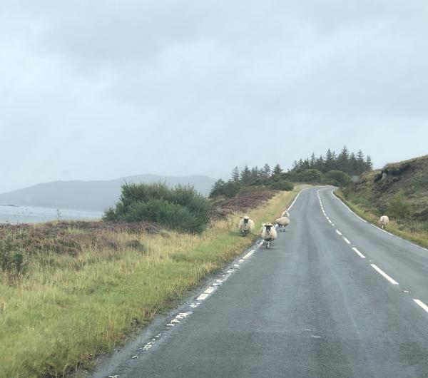 Sheep! by NikitaMorris