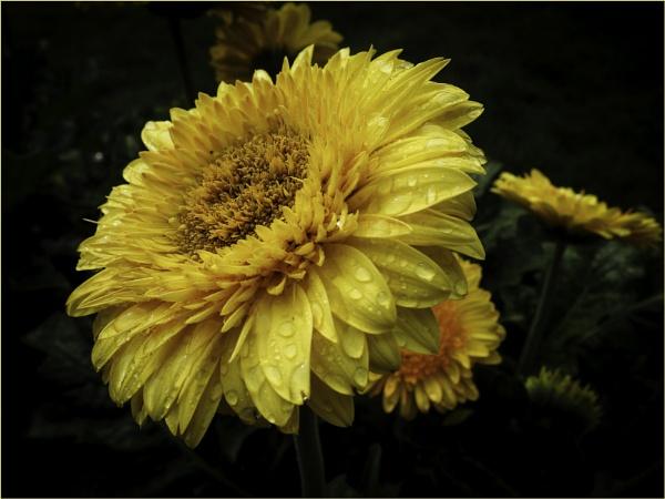 Flowers by Daisymaye