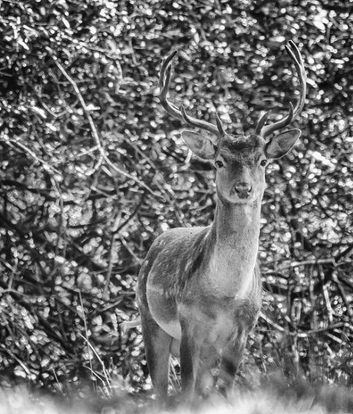 Dear Deer by adamsa