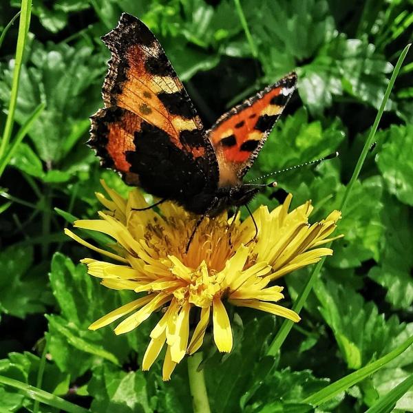 Butterfly 🦋 by wisk