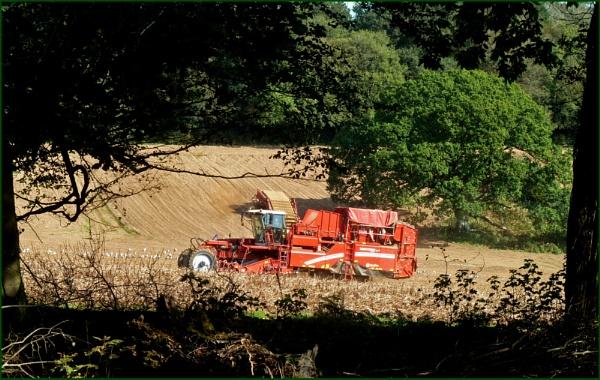 Harvesting potatoes by JuBarney