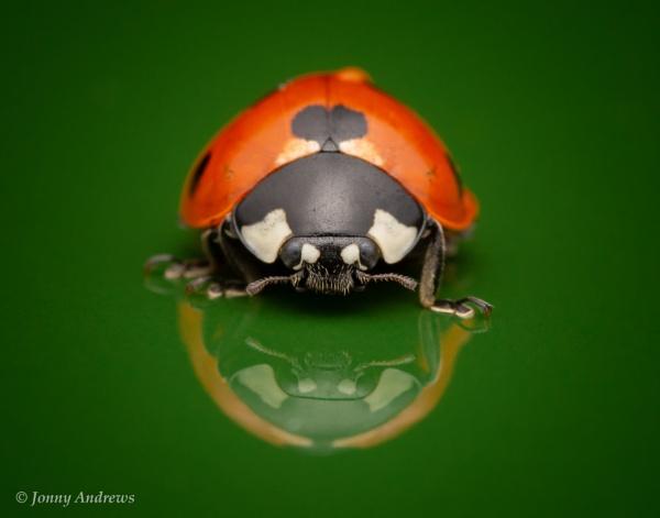 7-Spot Ladybird by JonnyNI