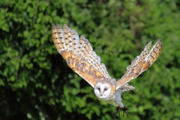 Graceful Flight by johnke